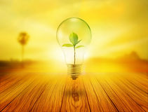 Bulb light with green tree inside on wooden in the sunrise, environment concept Royalty Free Stock Image