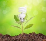 Bulb light with plant inside Royalty Free Stock Image