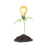 Bulb light with tree Stock Photo