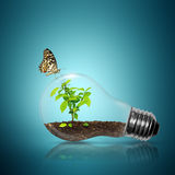 Bulb light with tree inside and butterfly. Bulb light with tree inside have butterfly on blue background stock photos