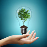 Bulb light with tree inside on woman hand. On blue background royalty free stock photos