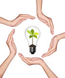 Bulb light in woman hand. Light bulb with sprout inside on white background Stock Image