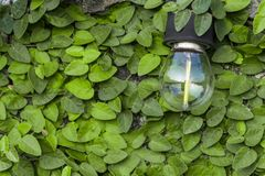 The bulb is mounted on a cement wall and has a green leaf as the stock images