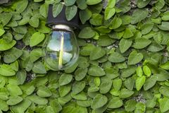The bulb is mounted on a cement wall and has a green leaf as the stock photos