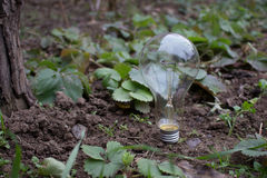 Bulb on the nature Stock Photo