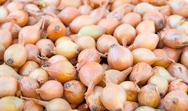Bulb onion. Royalty Free Stock Photos