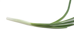 Bulb onion, isolated. On the white background Stock Images