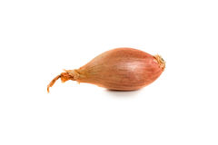 Bulb onion isolated on a white background Royalty Free Stock Images