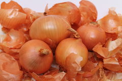 Bulb onion Stock Photography