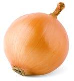 Bulb onion Royalty Free Stock Photo