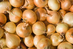 Bulb onions background. A pile of bulb onions on a counter Stock Photography