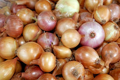 Bulb onions Stock Photography