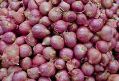 Bulb onions on sales Stock Photos