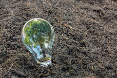 Bulb with plant growing Stock Photography