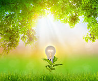 Bulb plant growing over natural green Stock Images