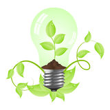 Bulb with plant inside Royalty Free Stock Photo