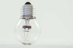 Bulb. Small bulb on white background Royalty Free Stock Photo