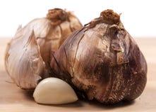 Bulb of smoked garlic Royalty Free Stock Photos