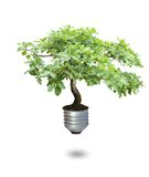Bulb tree Royalty Free Stock Photo