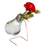 Bulb vase with roses Stock Images