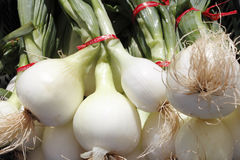 Bulb, white onions with tops. An outdoor display of many bulb white onions with green tops Stock Photo