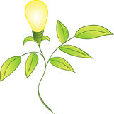 Bulb Wielding Plant Stock Images