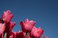 Bulbi contro un cielo blu Fotografia Stock Libera da Diritti