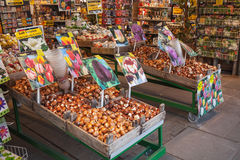 Bulbi e semi decorativi a Amsterdam fotografia stock