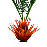 Bulbil of Cycas Circinalis Stock Photos