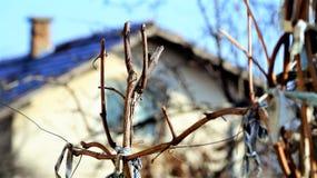 bulblet Στοκ φωτογραφίες με δικαίωμα ελεύθερης χρήσης