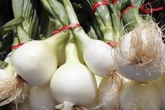 Bulbo, cebollas blancas con las tapas. Foto de archivo