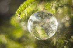 Bulbo da água Fotos de Stock Royalty Free