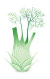 Bulbo da erva-doce Fotografia de Stock
