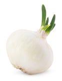 Bulbo de la cebolla con el brote verde aislado en blanco fotografía de archivo