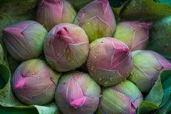 Bulbo de Lotus Foto de Stock