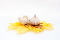Bulbo del ajo aislado en blanco Fotos de archivo libres de regalías