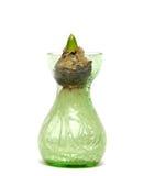 Bulbo do Hyacinth Fotos de Stock Royalty Free