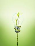Bulbo favorable al medio ambiente fotografía de archivo libre de regalías