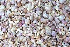Bulbo fresco dos cravos-da-índia de alho para o fundo Imagens de Stock Royalty Free