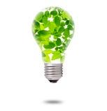 Bulbo interior de las hojas del verde Fotografía de archivo libre de regalías