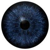 Bulbo oculare blu spaventoso scuro, animale ed occhio umano fotografia stock libera da diritti