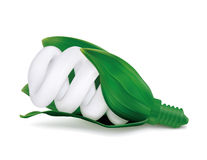 Bulbo verde Fotografía de archivo libre de regalías