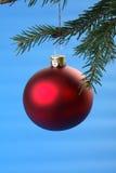 Bulbo vermelho e coníferas do Natal isolados no azul Fotos de Stock Royalty Free