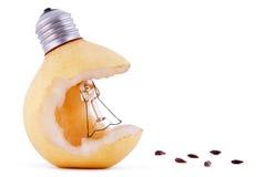 Bulbo y gérmenes de lámpara de la pera Imagen de archivo
