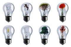 Bulbos Imagen de archivo libre de regalías