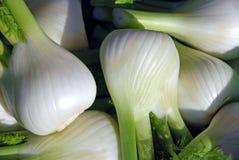 Bulbos da erva-doce imagens de stock