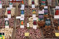 Bulbos de flor de Amsterdão imagem de stock