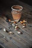 Bulbos de flor de la primavera con el utensilio de jardinería y los potes de cerámica en la tabla de madera Imagenes de archivo