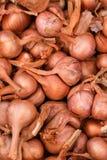 Bulbos de la cebolla Imagen de archivo libre de regalías