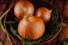 Bulbos de la cebolla y del eneldo en cuenco imagen de archivo libre de regalías